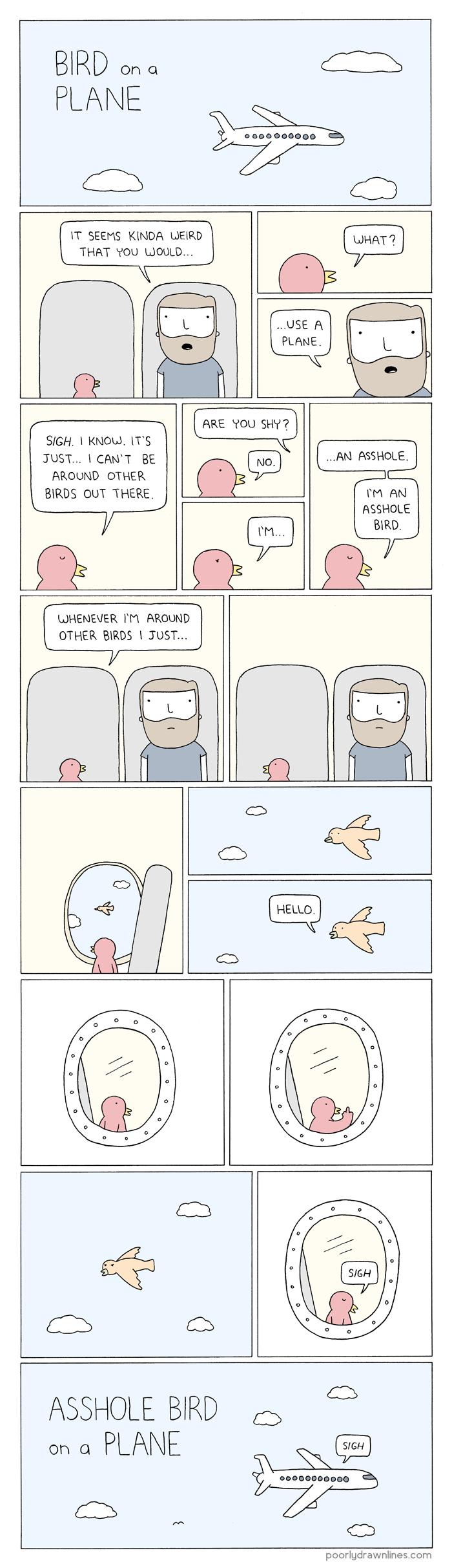 bird-on-plane