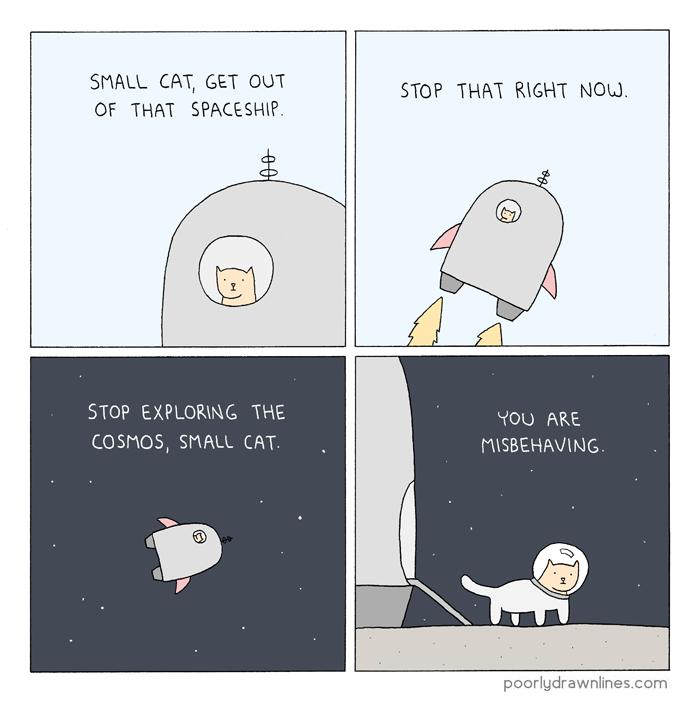 bad-small-cat